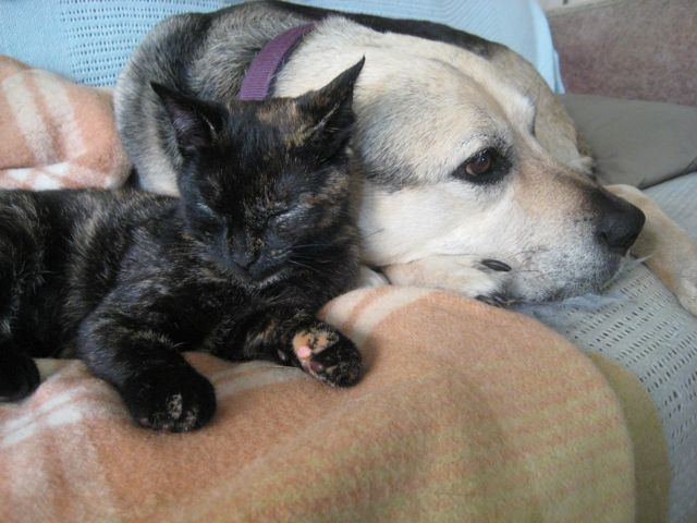 The Cat and The Dog at rest.